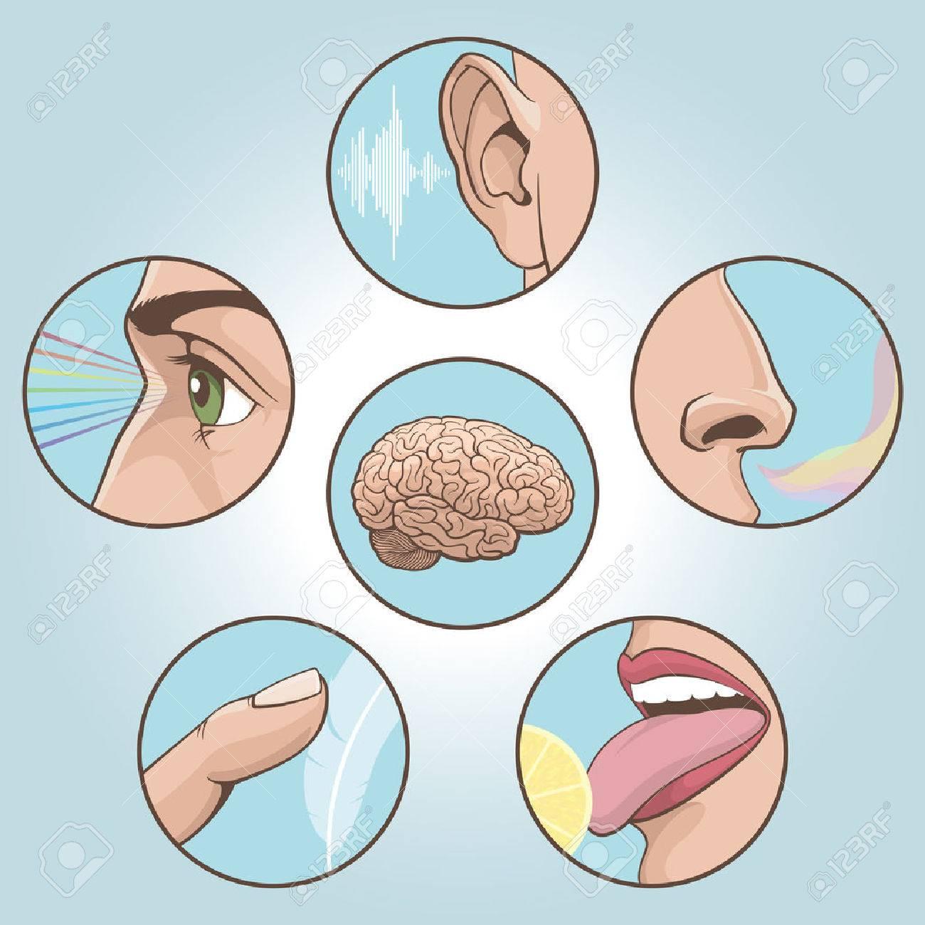 A set of six anatomical images. Vector illustration - 61185293