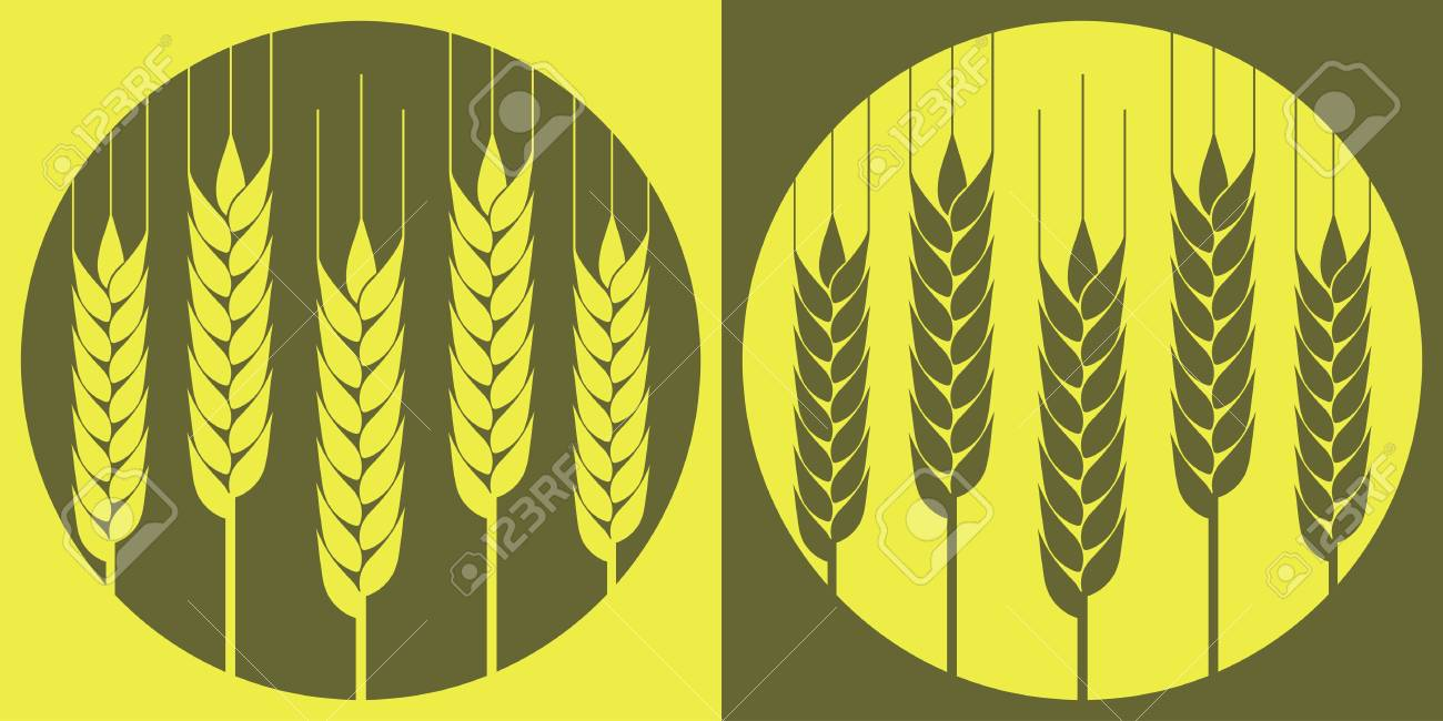 Ears of wheat in the vector on the local background Stock Vector - 14636224