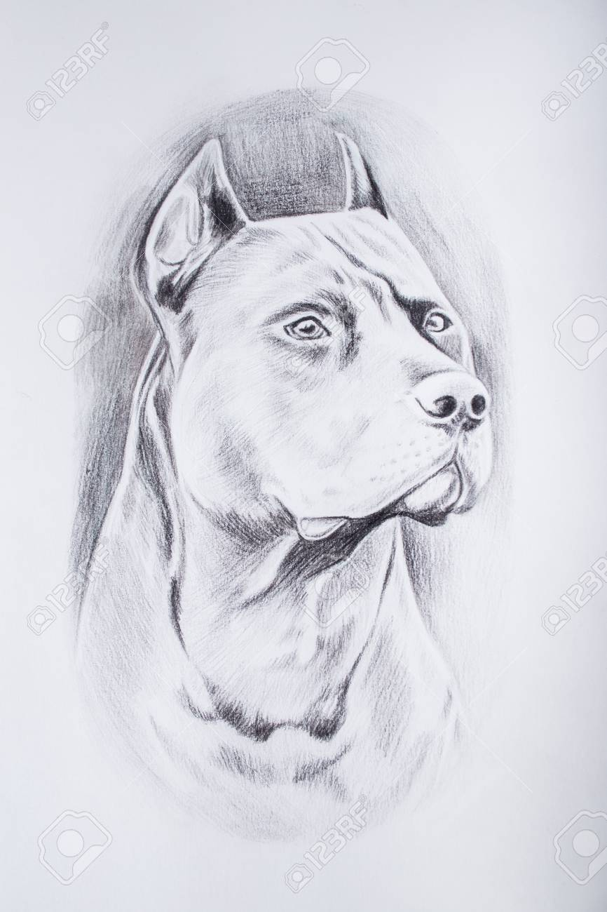 Pencil sketch of the dog on white background
