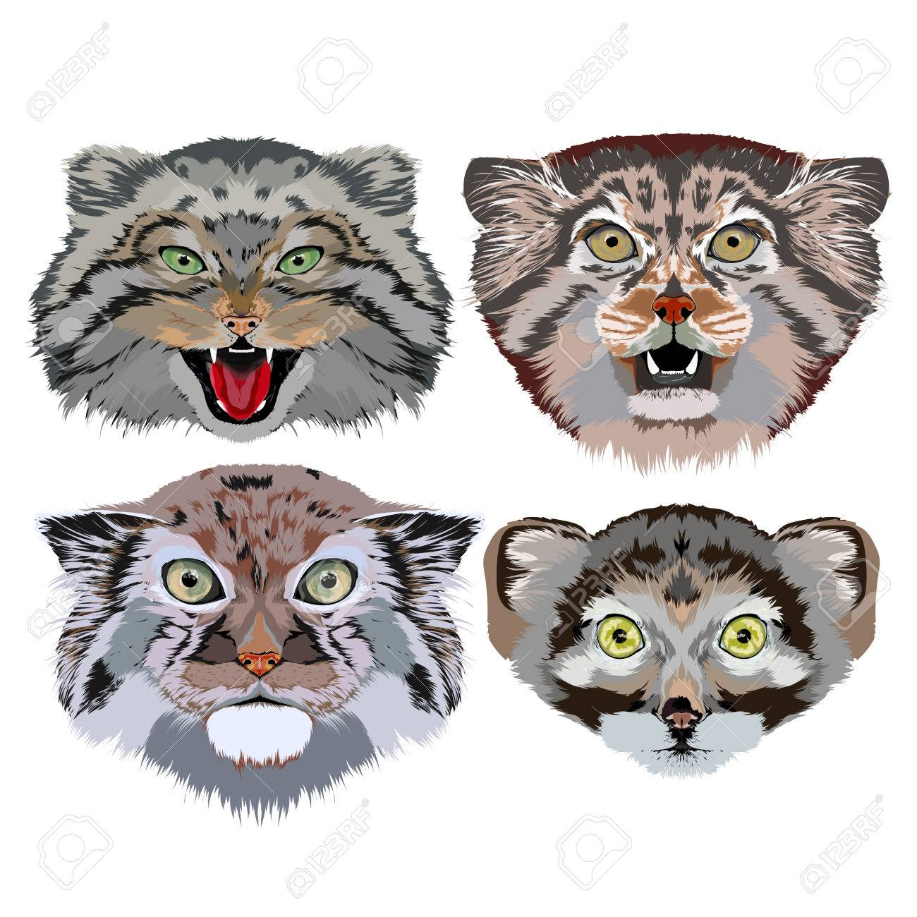 草原猫 マヌルネコグリーティング カードに使用する画像の肖像画が