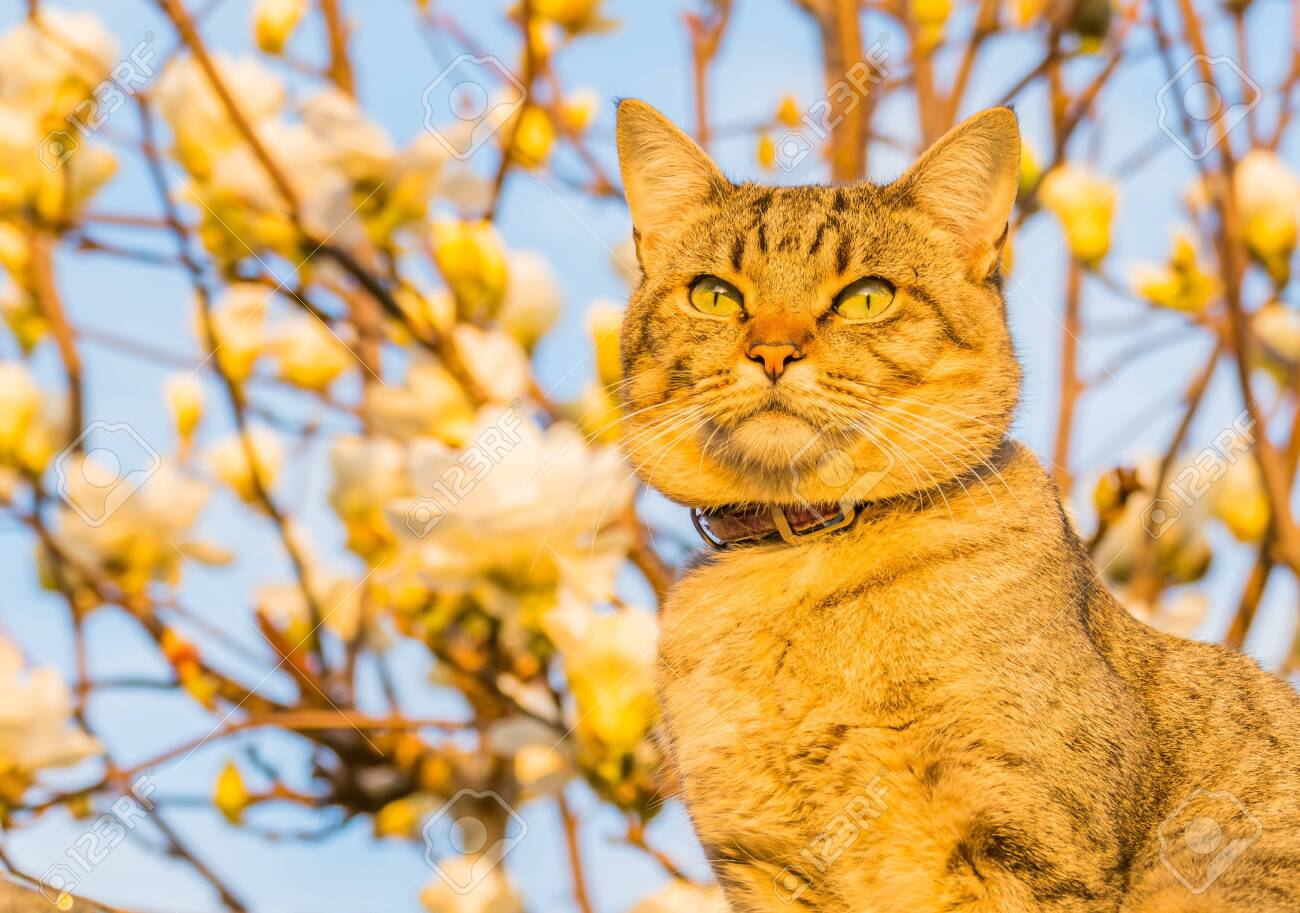cat domestic outdoors with natural sunlight and defocused flowers background - 150765315