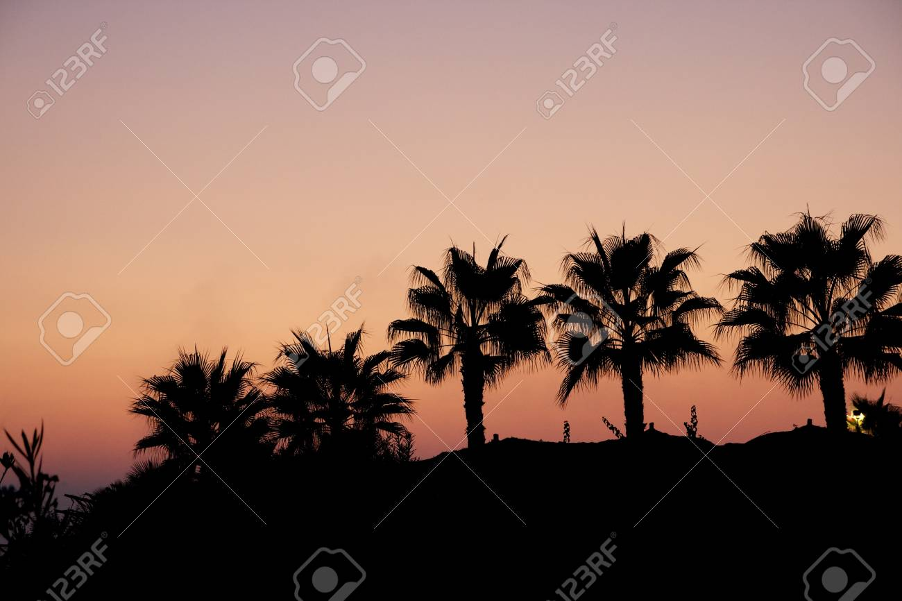 Palms tree in sunset Stock Photo - 10565864