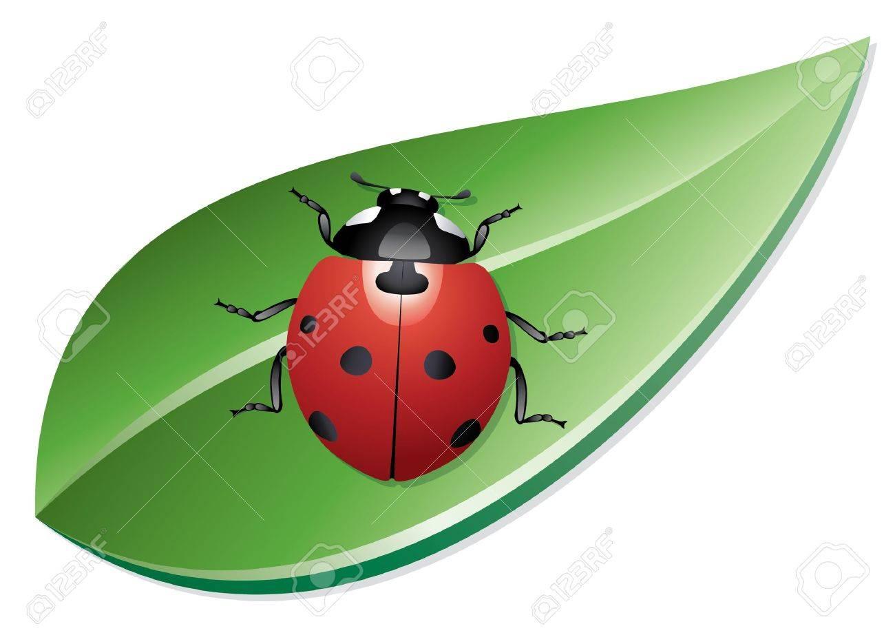 vector ladybird on a leaf Stock Vector - 11662788