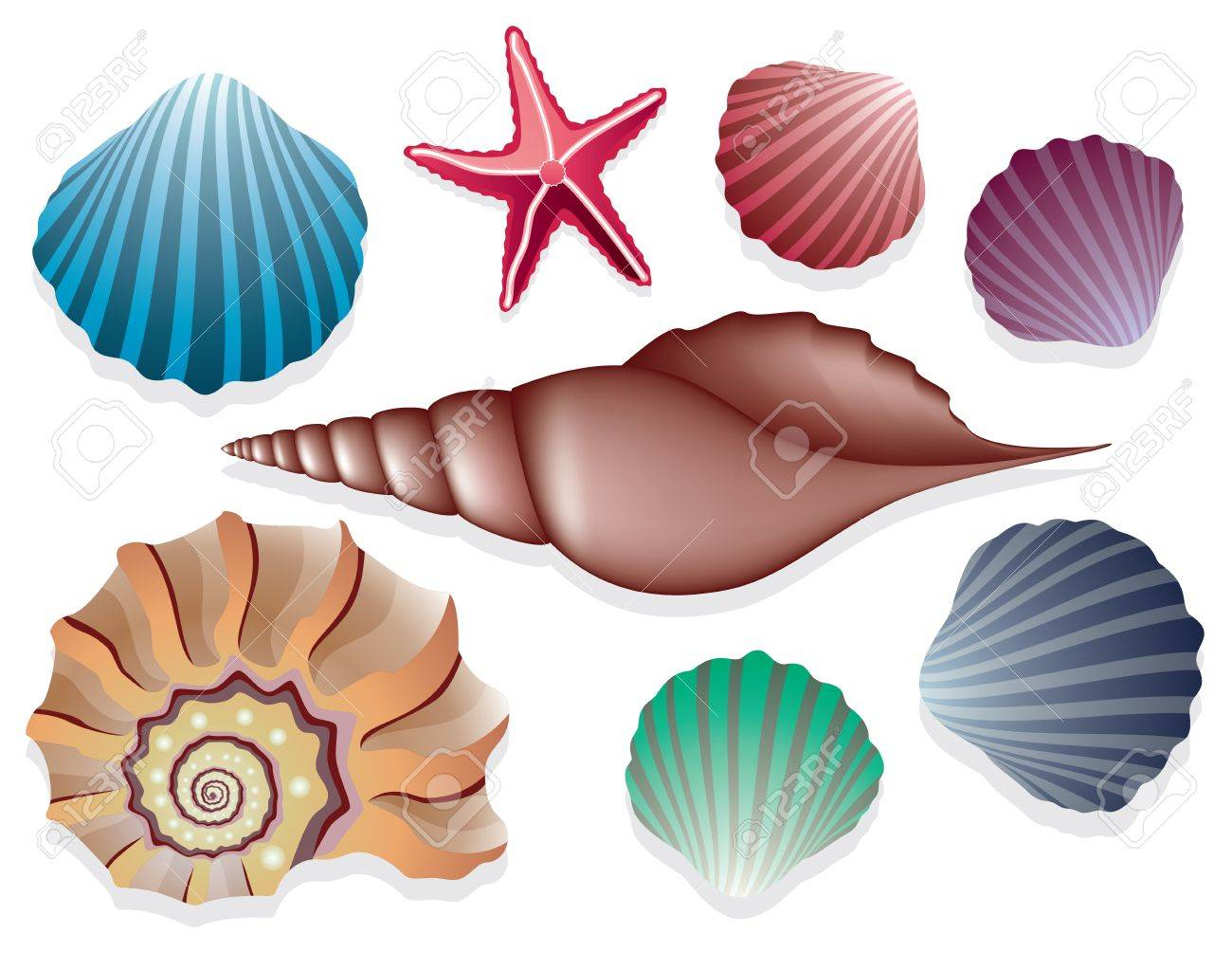 vector collection of sea shells Stock Vector - 12497180