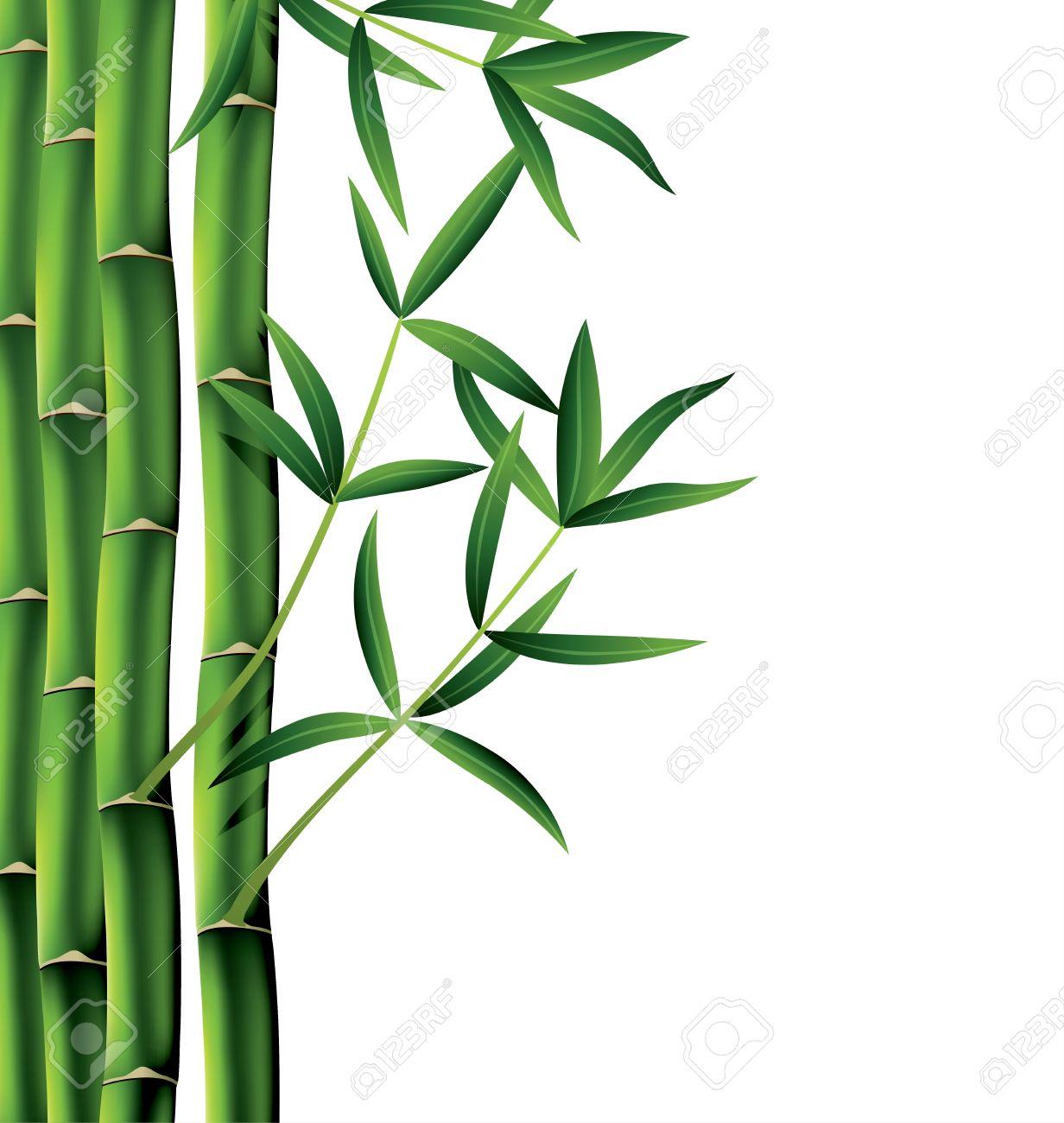 Vektor Illustration Von Bambus Zweige Auf Weissem Hintergrund