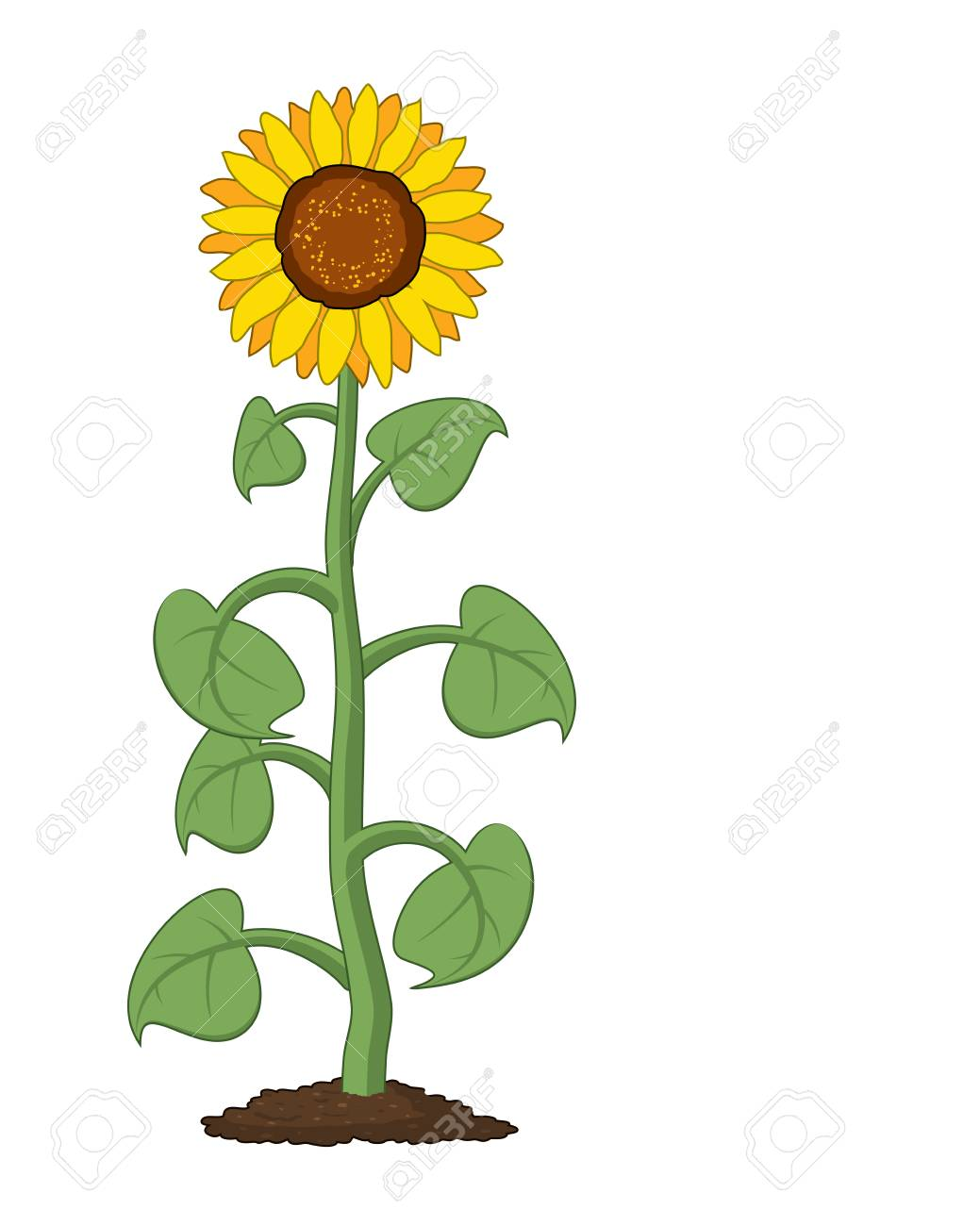 Vector Cartoon Of Garden Sunflower Grow In Soil Summer Agriculture Royalty Free Cliparts Vectors And Stock Illustration Image 97181355