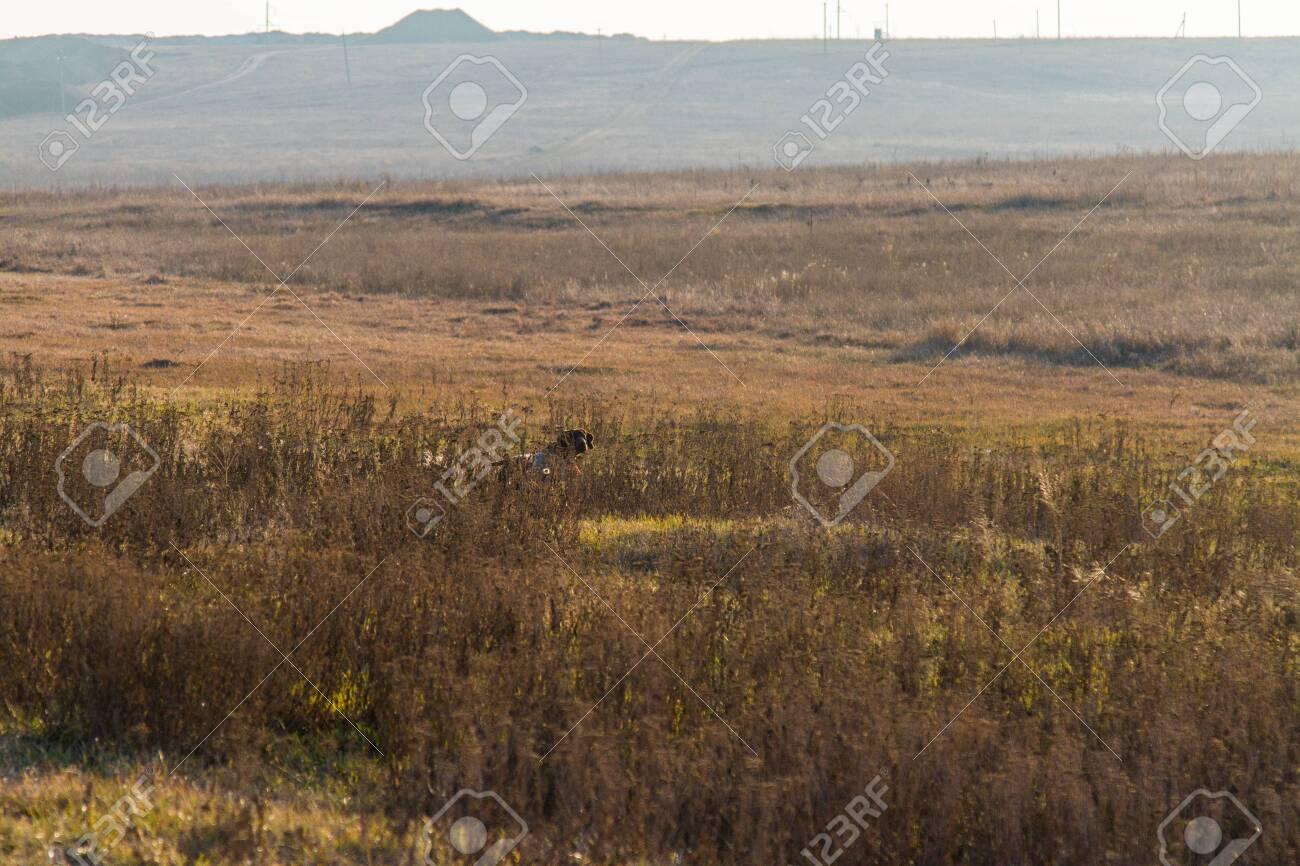 Winter Tavrian steppe. Zaporozhye region, Ukraine. February 2019 - 131716883