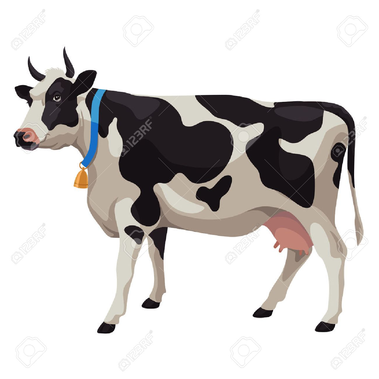 black and white cow with bell side view isolated royalty free