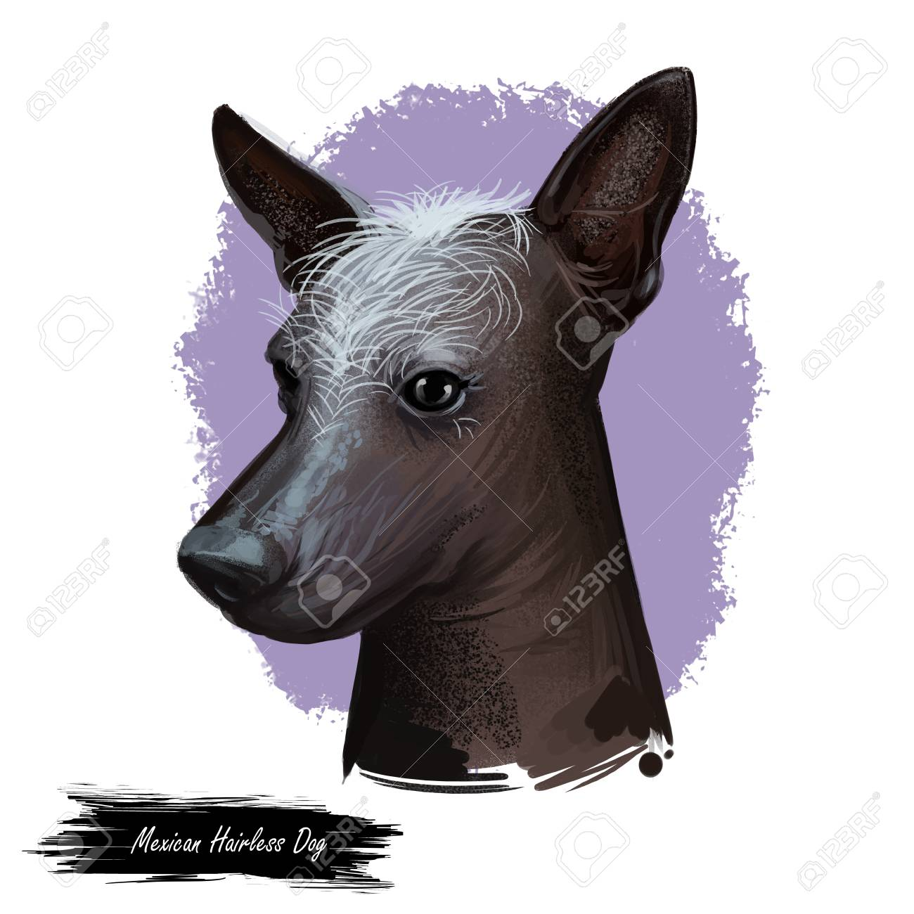 Mexican Hairless Dog Breed Xoloitzcuintli Digital Art Illustration