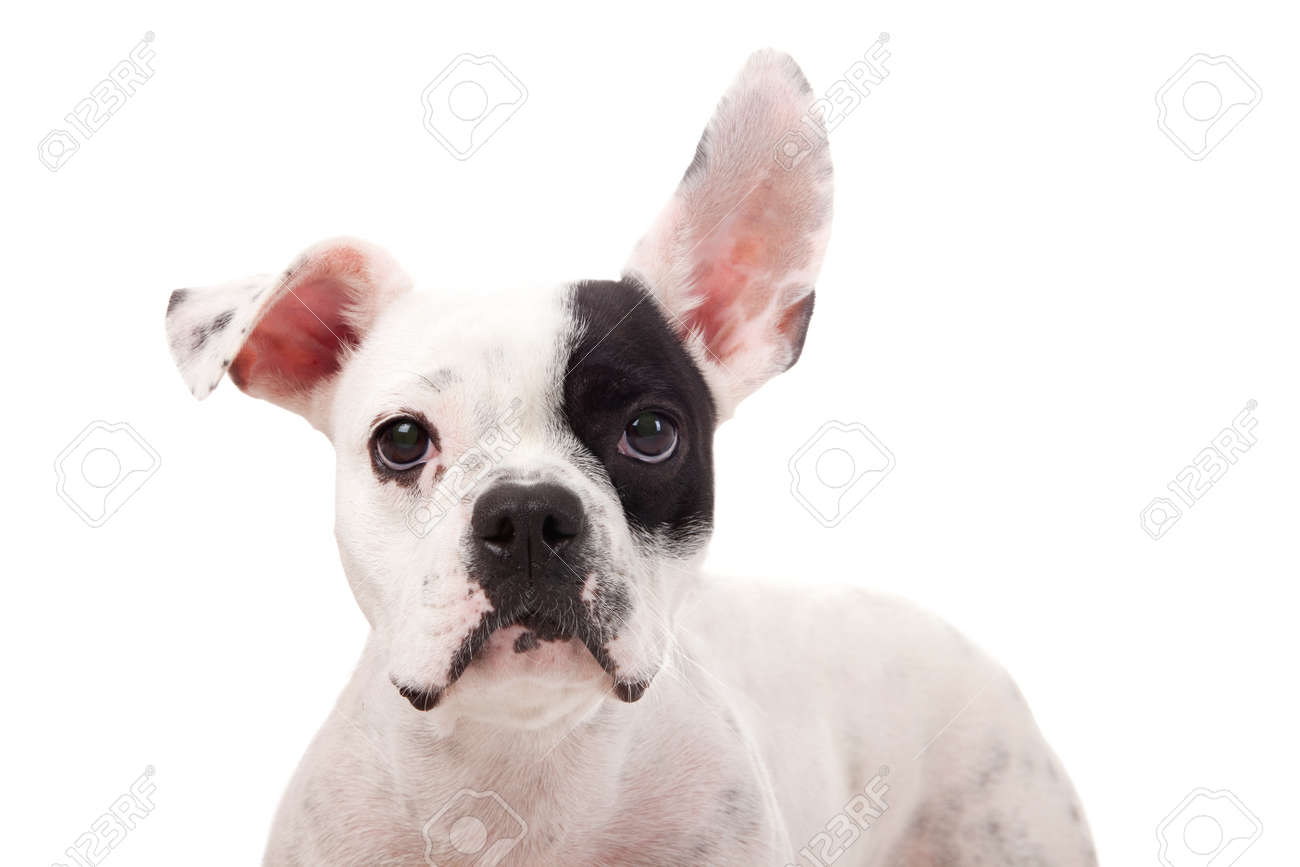 Crossbreed cute puppy in a studio having a great time Stock Photo - 19185032