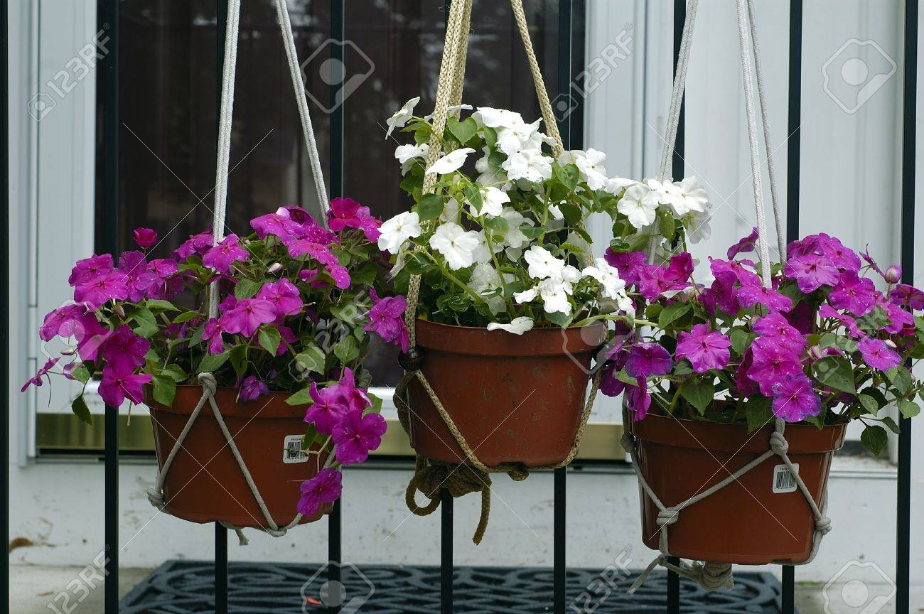 Beautiful Flower Baskets Hung On A House Front Stock Photo Picture