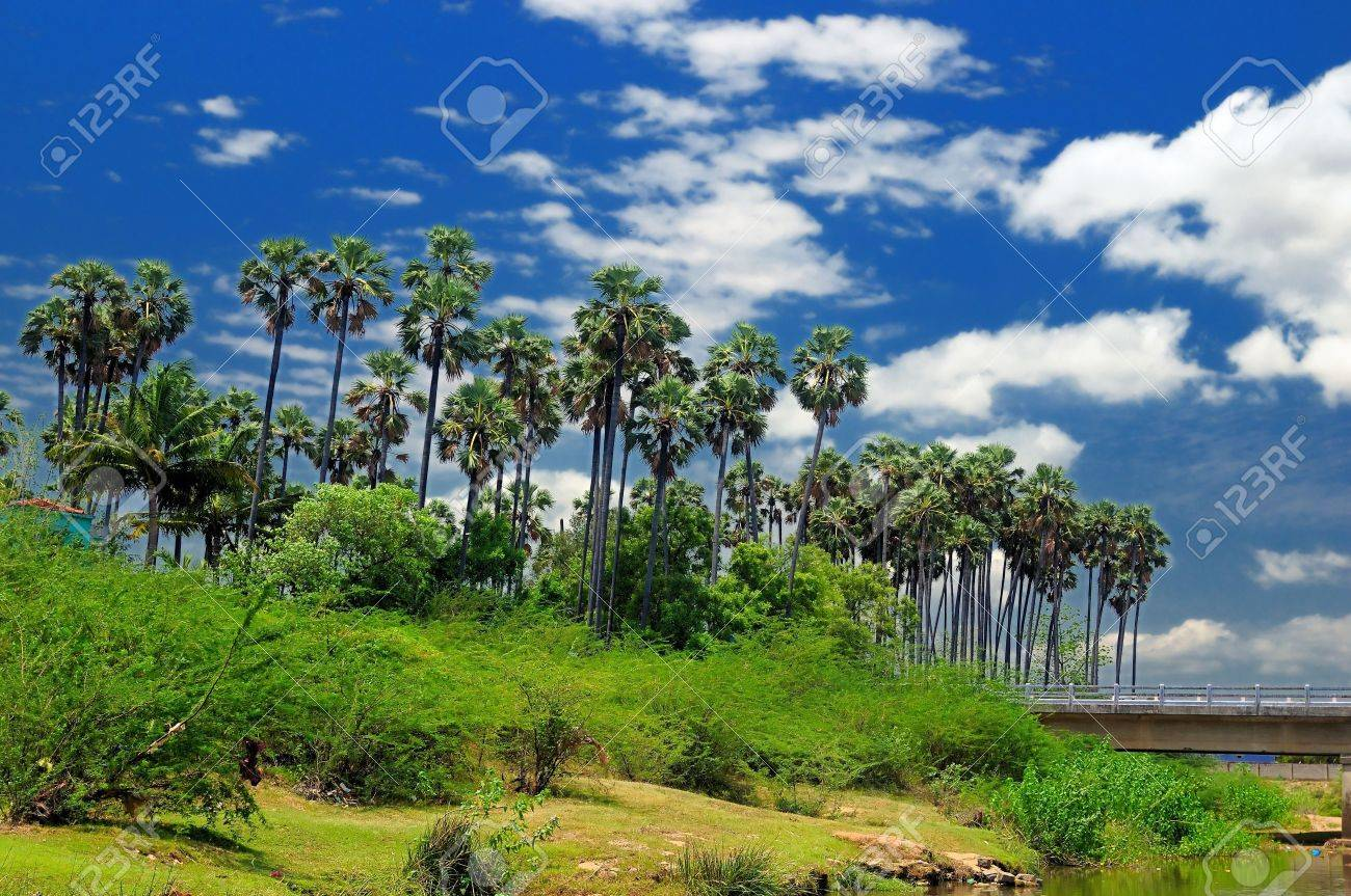 Western ghats in India with thick vegetation Stock Photo - 10016650