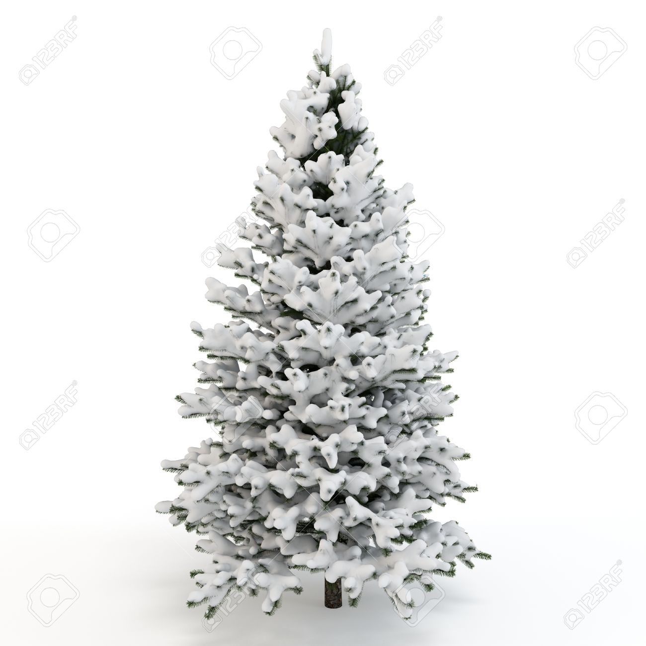 3d pine tree full of snow on white background stock photo picture