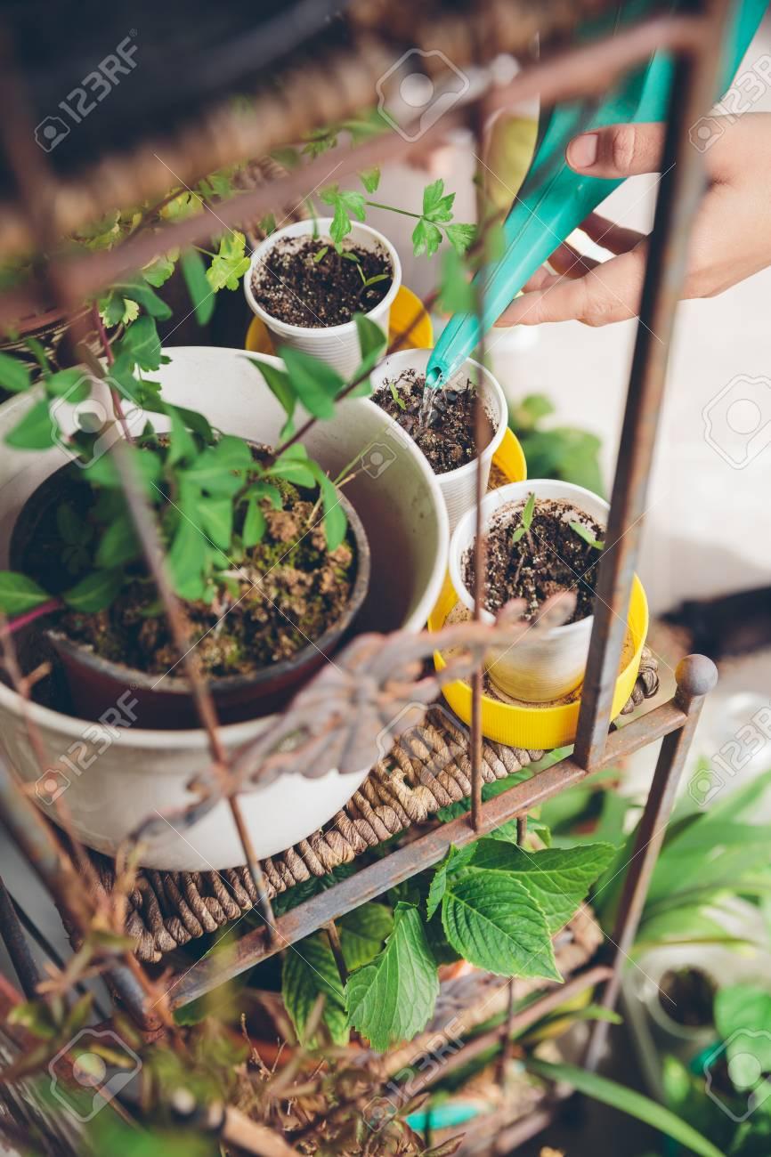Primer Plano De Manos De La Mujer Regar Plantas Jóvenes En Un Jardín Urbano Interior De Terraza Casa