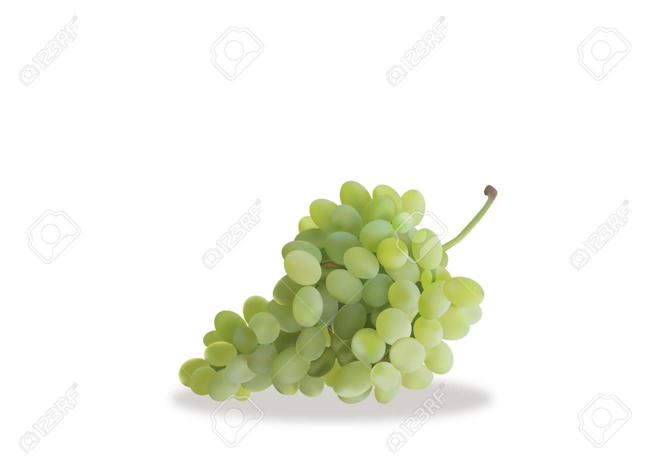 Autumn, grapes, Stock Vector - 16326488
