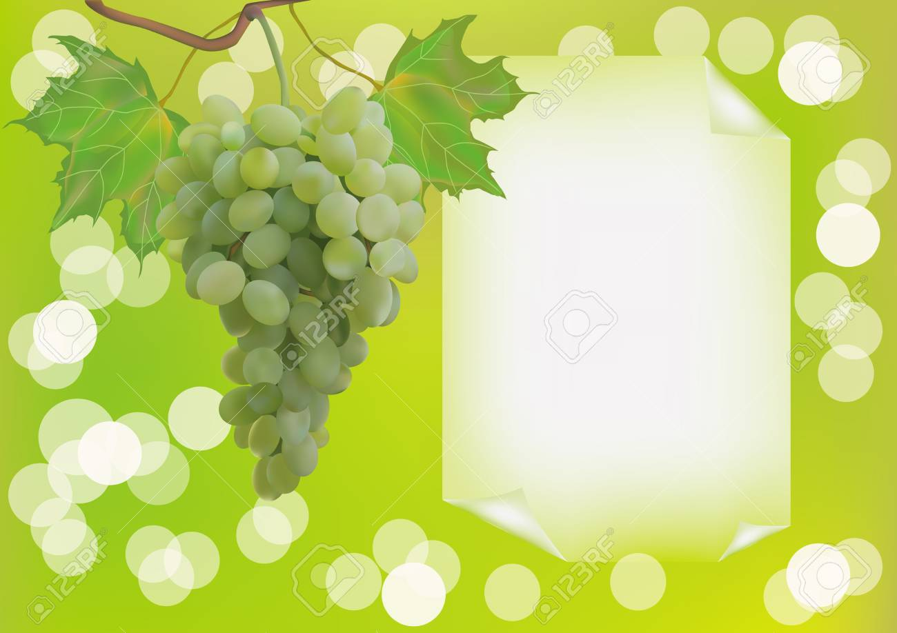 Advertising wine grapes Stock Vector - 17720591