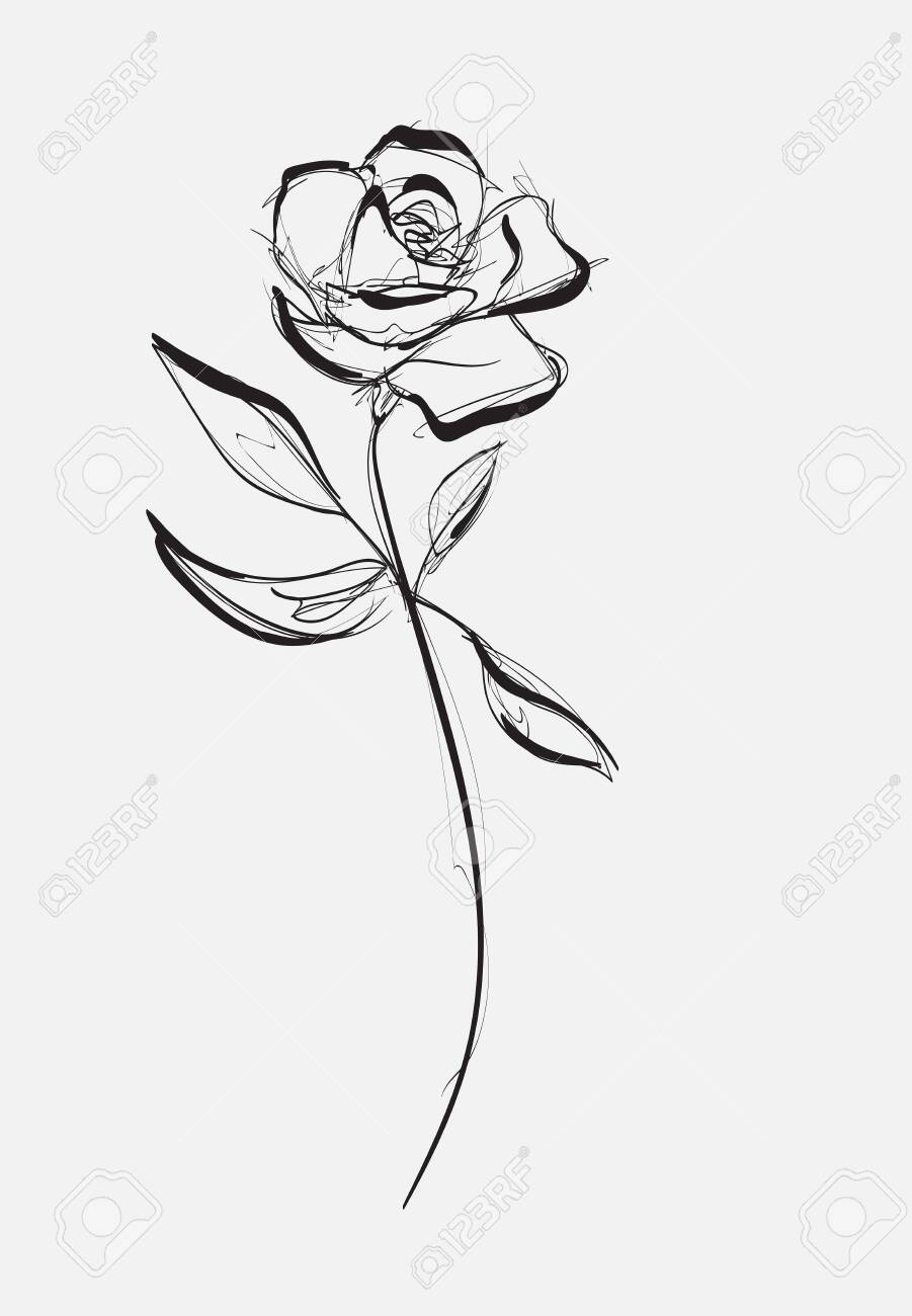 Flower Rose Sketch Painting Hand Drawing White Bud Petals Royalty Free Cliparts Vectors And Stock Illustration Image 141046191