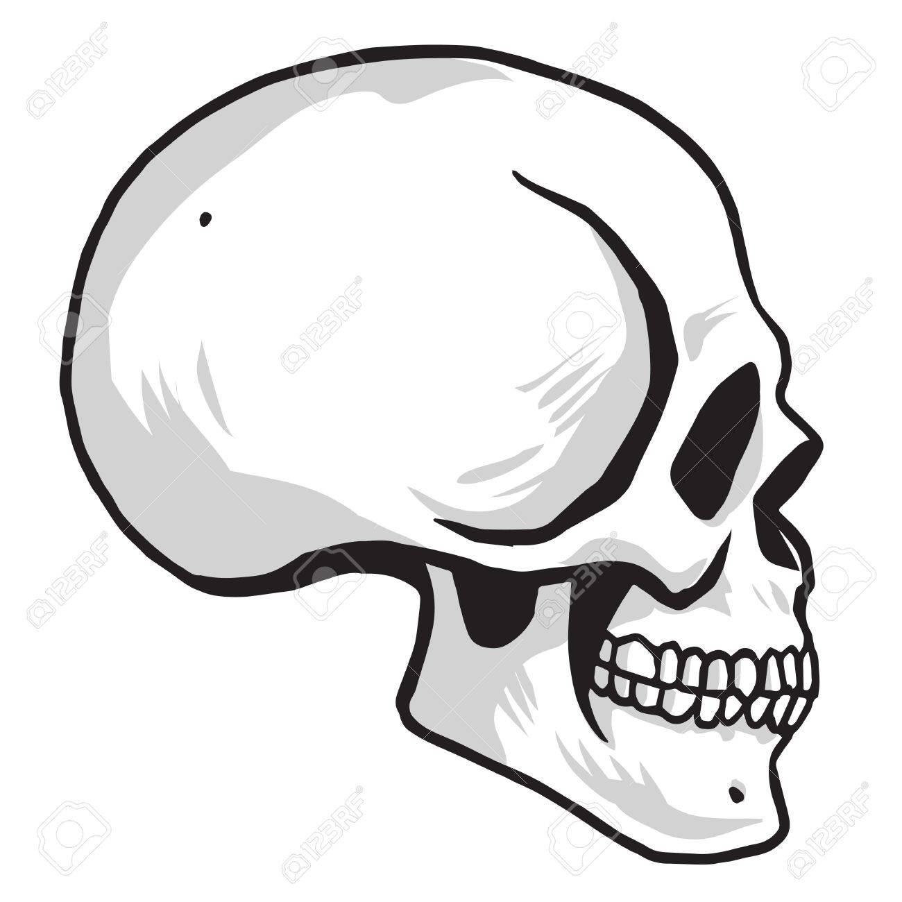 skull vector illustration drawing royalty free cliparts vectors rh 123rf com sugar skull vector art skull artwork vector