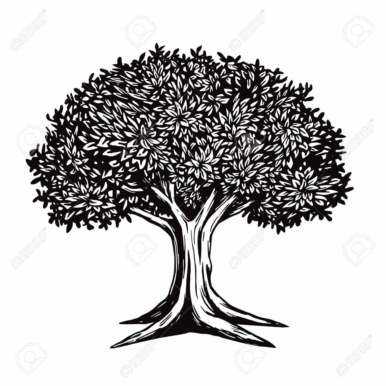 221 Tamarind Tree Stock Illustrations, Cliparts And Royalty Free ...
