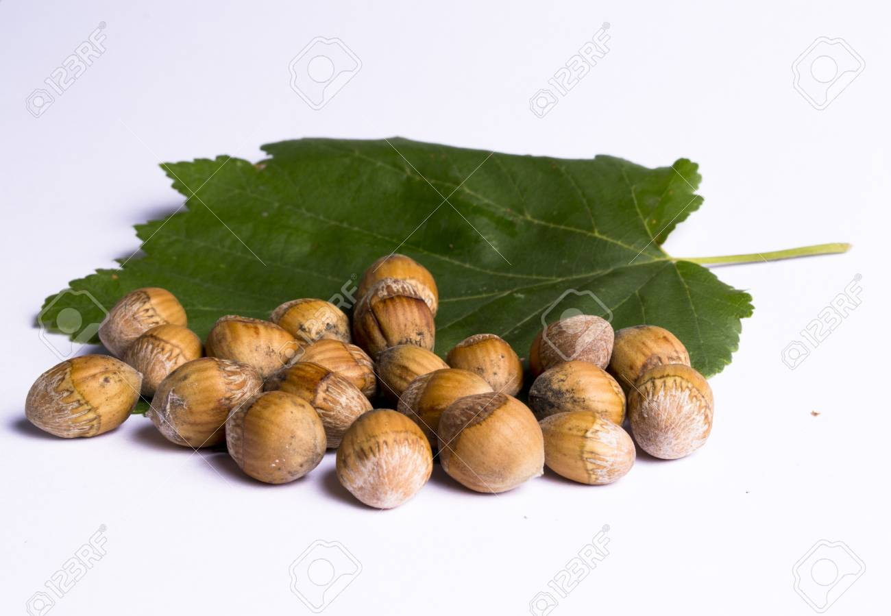 hazel nuts with leaves on the white background Stock Photo - 10535326