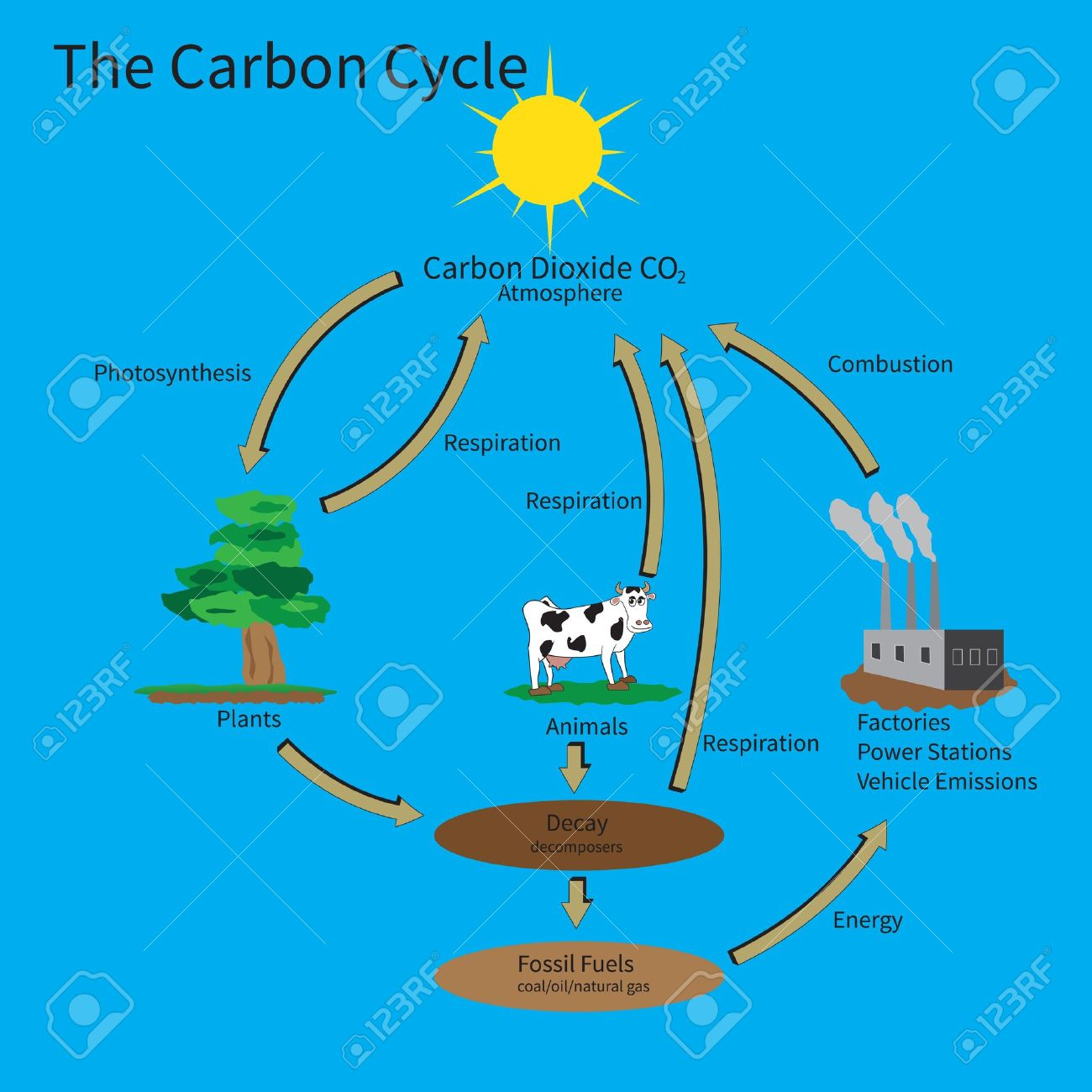 The carbon cycle showing how carbon is recycled in the environment the carbon cycle showing how carbon is recycled in the environment stock vector 17736512 ccuart Images