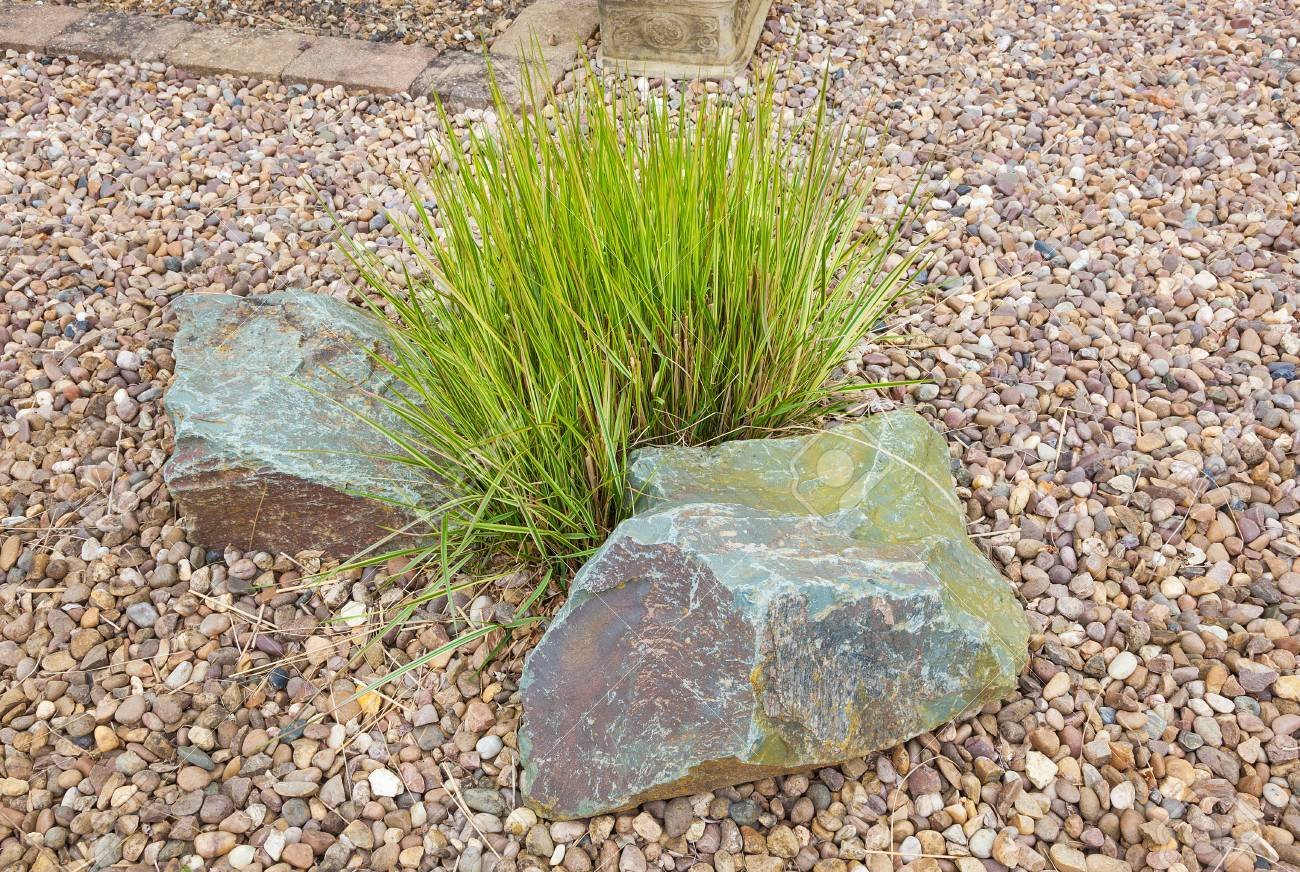 ziergras satz in steingarten lizenzfreie fotos, bilder und stock, Garten ideen