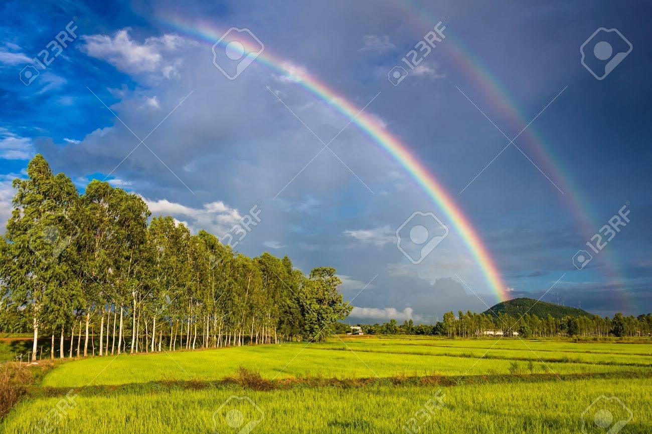 Rainbow over the rice field with row of eucalyptus trees Stock Photo - 21236861