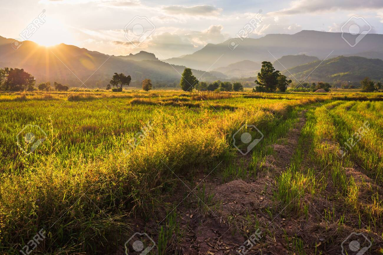 Farmland after harvest, beautiful countryside scenic before sunset in Lom Kao, Petchabun province of Thailand - 120409111