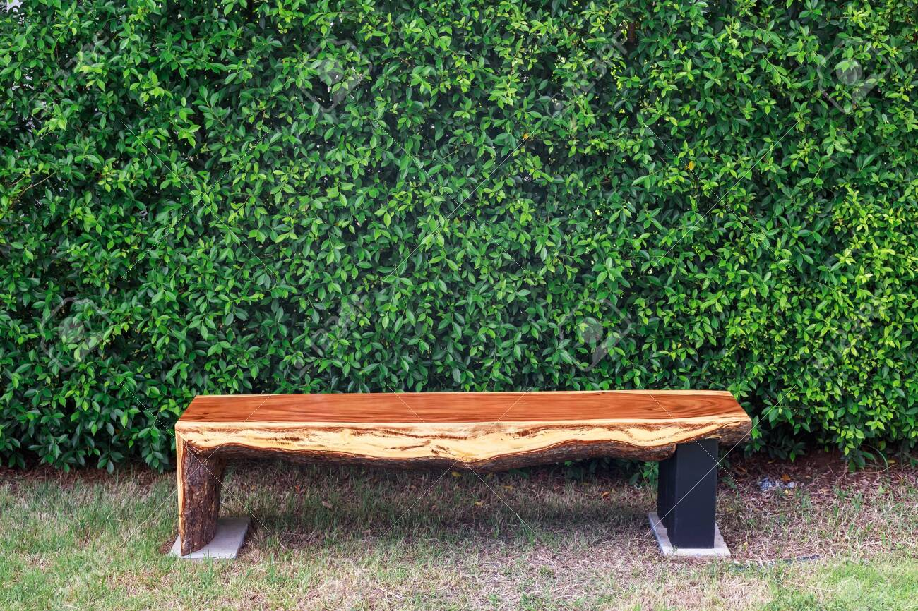 Log bench in the garden placed at the banyan tree bush wall