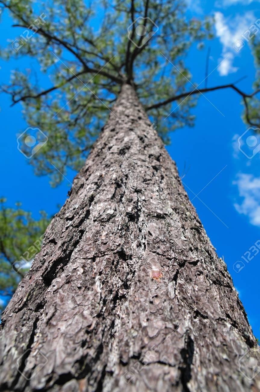 bark Stock Photo - 16559198