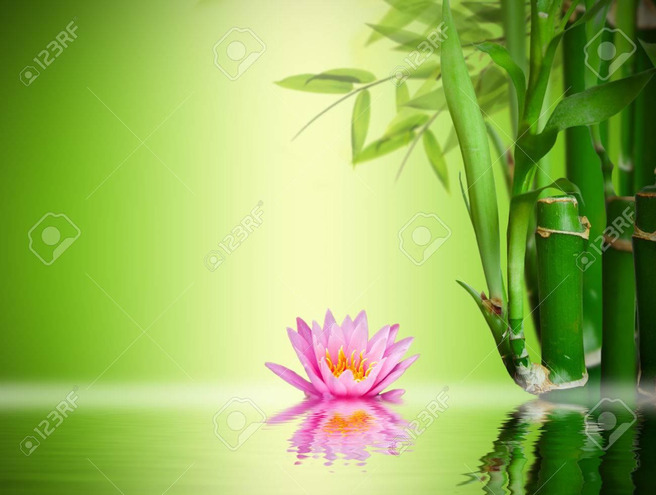 Zen garden - 35141282