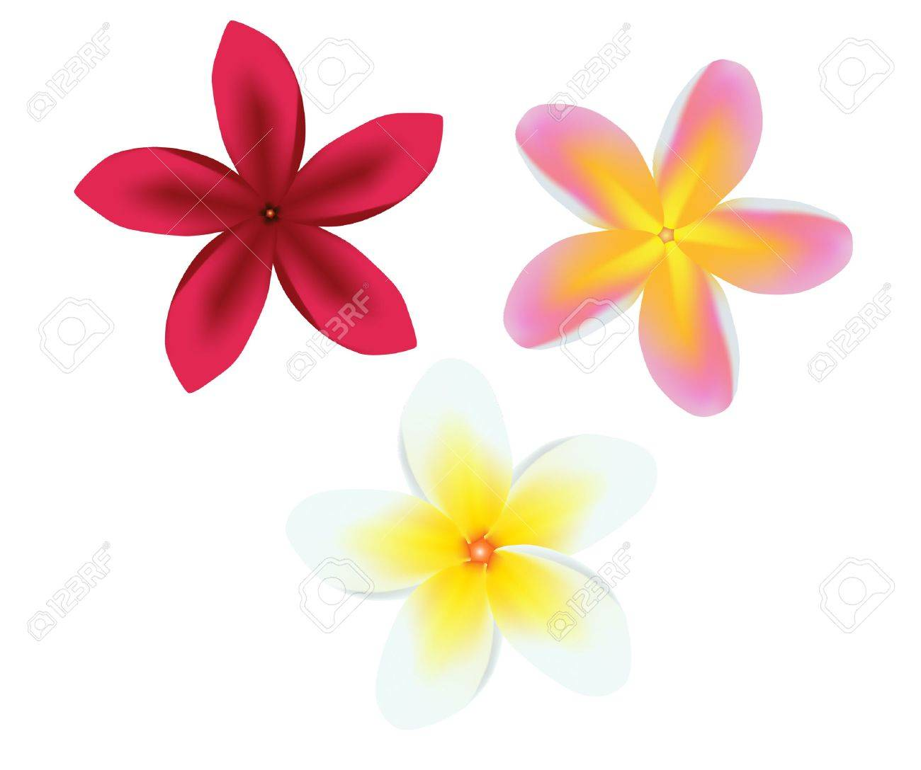 vector illustration of a frangipani plumeria flower set Stock Vector - 4244228