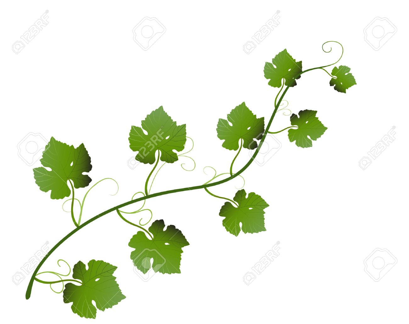 vector illustration of green grape leaves on vine royalty free rh 123rf com vine vector image vine vector png