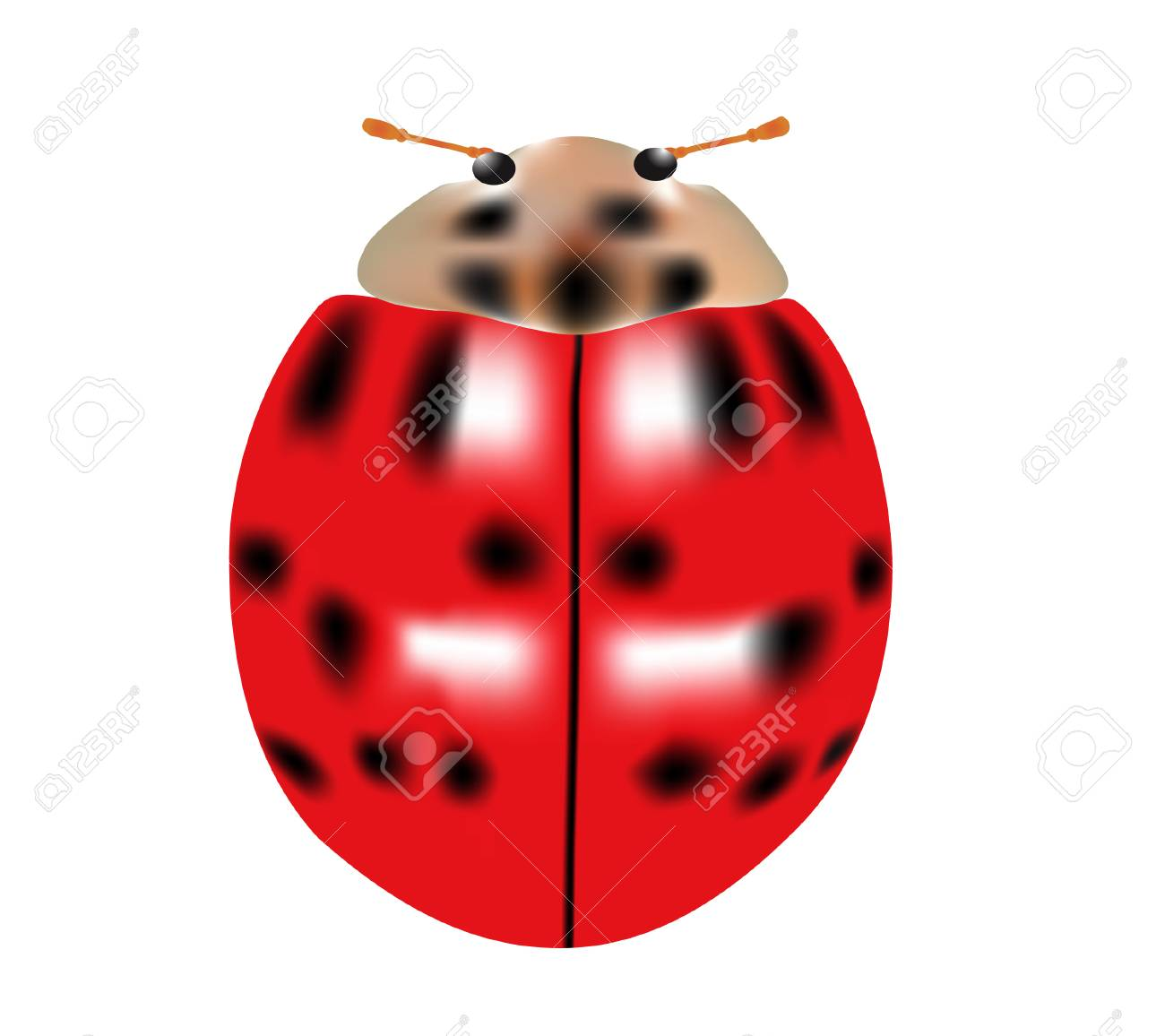 vector  illustration of a single ladybug isolated on white Stock Vector - 4244109
