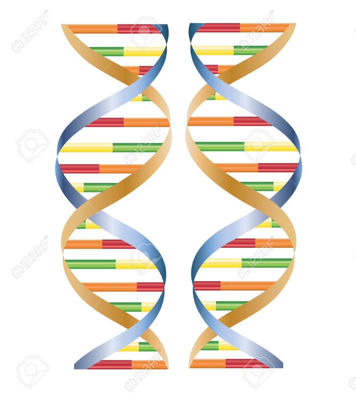 vector of DNA isolated on white Stock Vector - 4244340