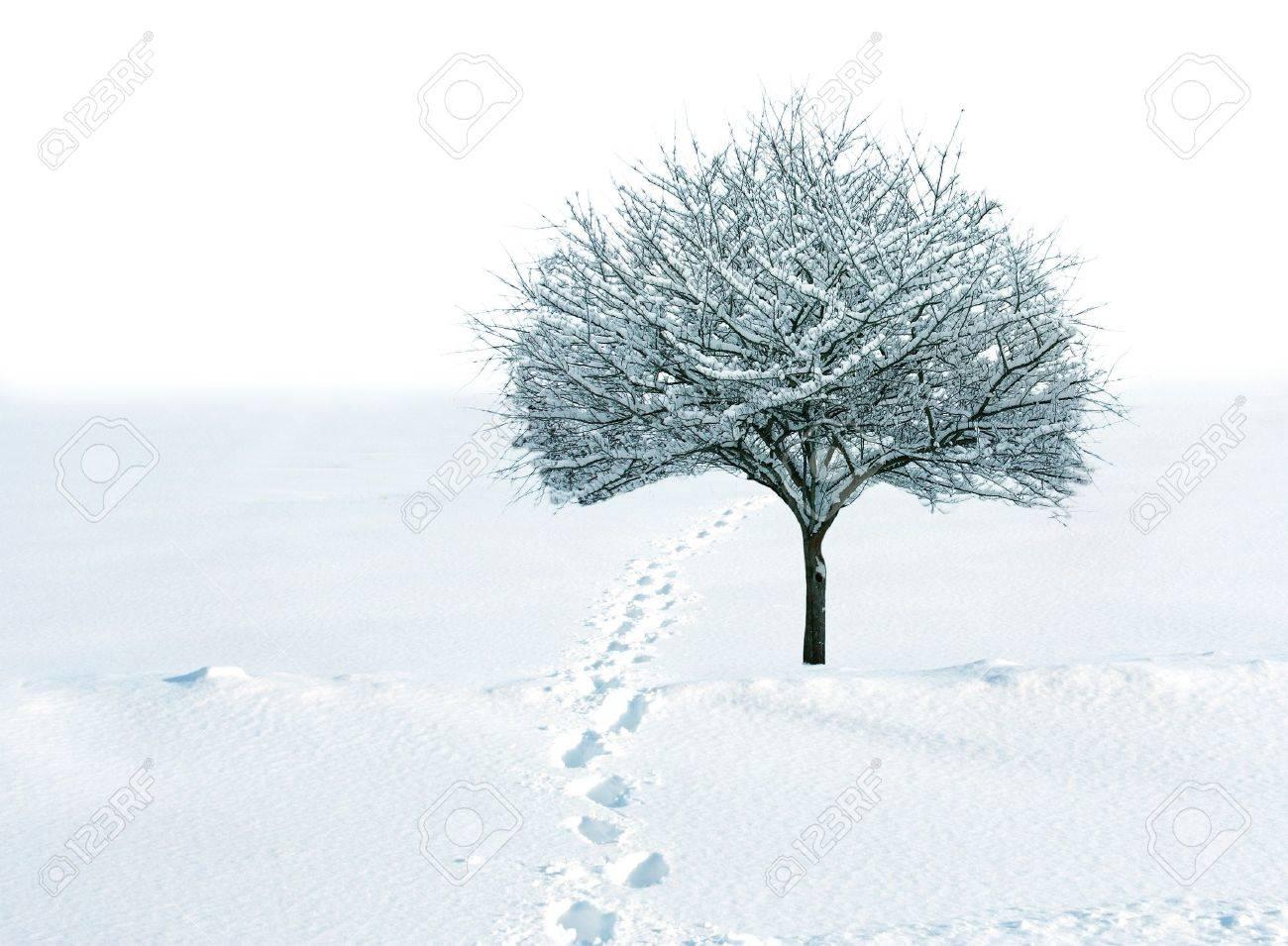 [JEU] 3 images = 1 film - Page 8 4247148-Cockspur-seul-arbre-dans-le-champ-de-la-neige-avec-empreintes-Banque-d'images