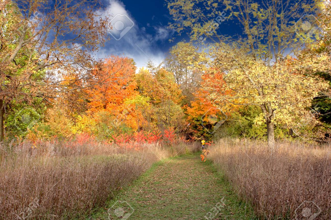 colorful golden autumn afternoon Stock Photo - 4248411