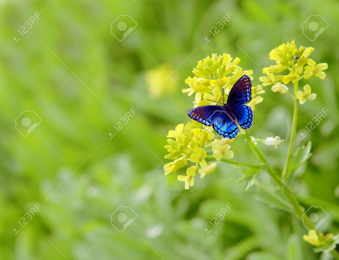 flower and blue butterfly stock photo picture and royalty