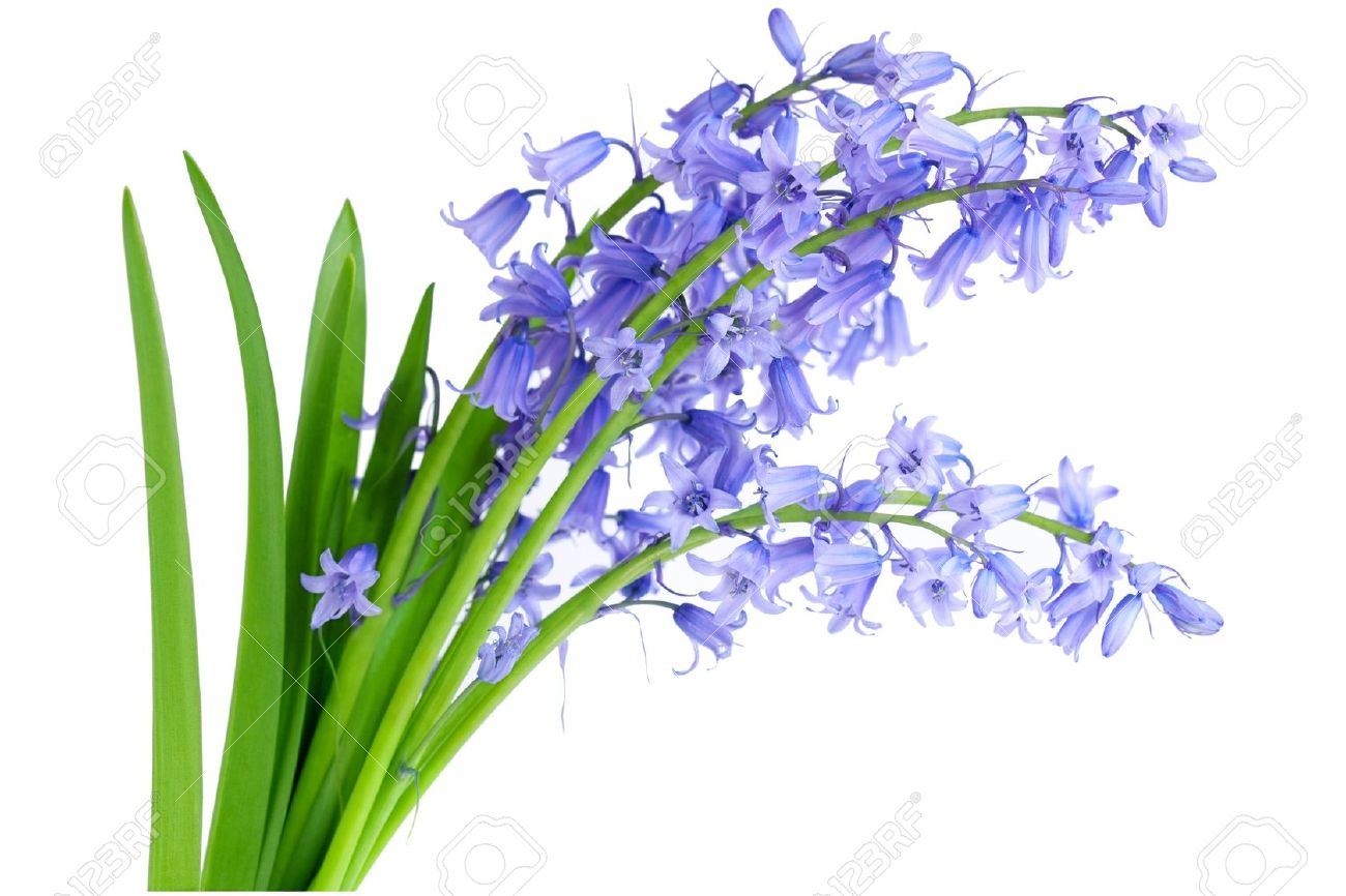 Delighted white blue bell like flowers contemporary images for best white blue bell like flowers pictures inspiration wedding and mightylinksfo Gallery