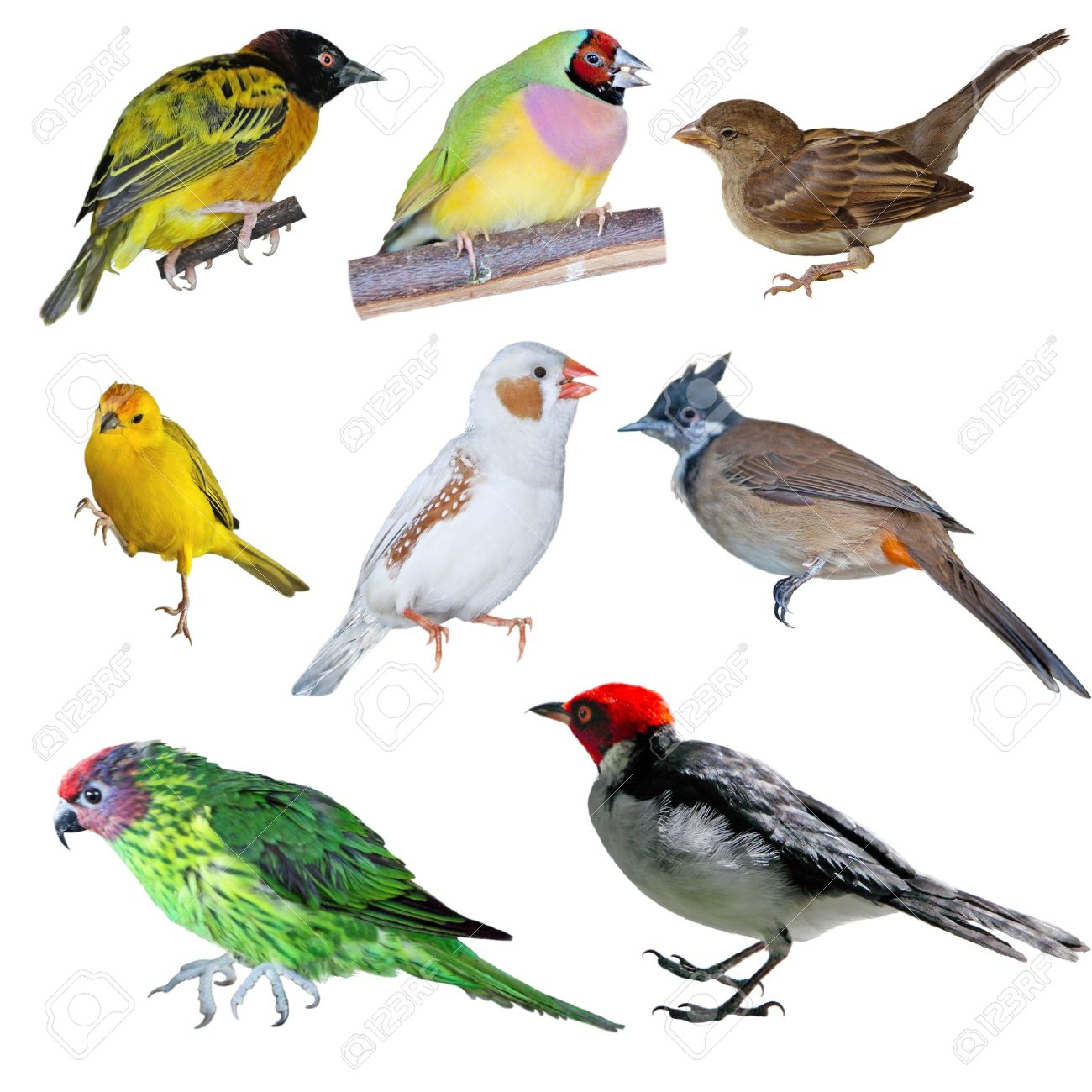 Set of birds in different Different Kinds Of Birds
