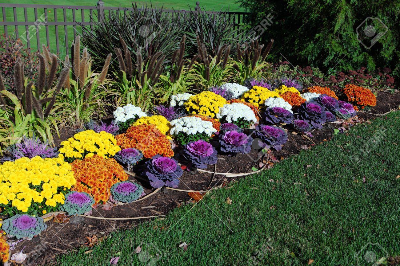 Jardin De Fleurs Colorées Avec Le Chou D\'ornement, Le Chrysanthème ...