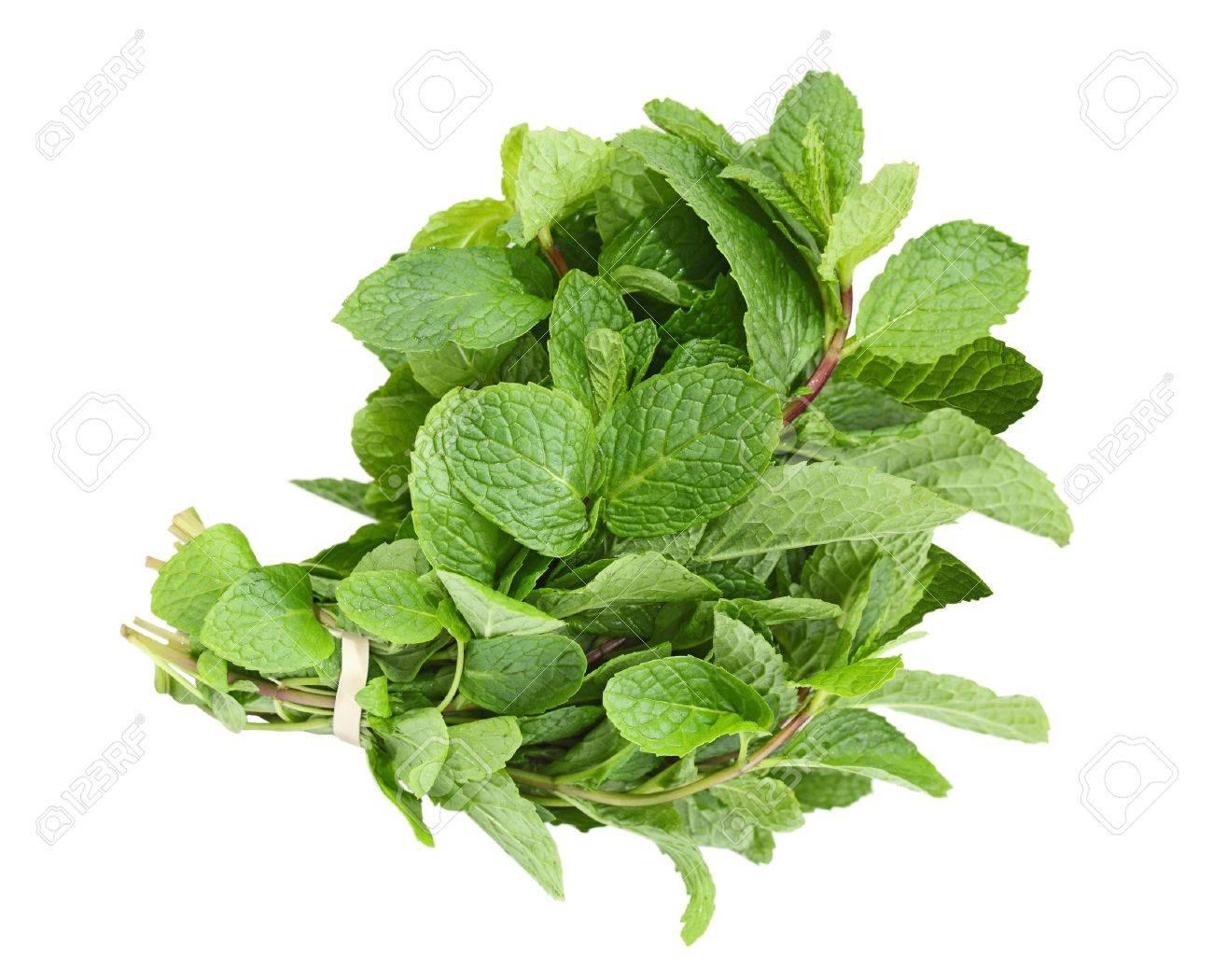 Fresh common herb mint bundle isolated on white Stock Photo - 11865606