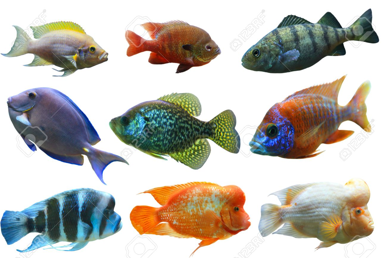 Colorful Aquarium Fish Set Isolated On White Background Stock Photo