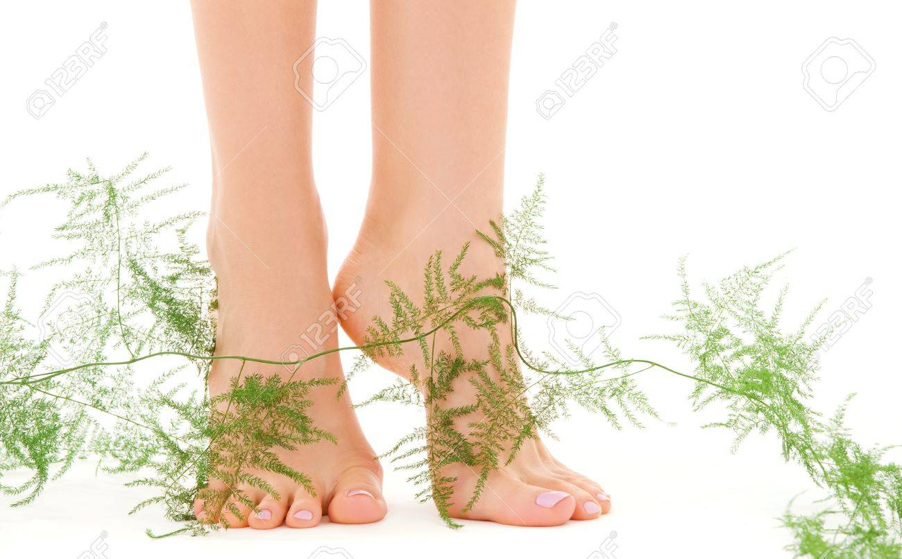 picture of female feet with green plant over white Stock Photo - 5348615