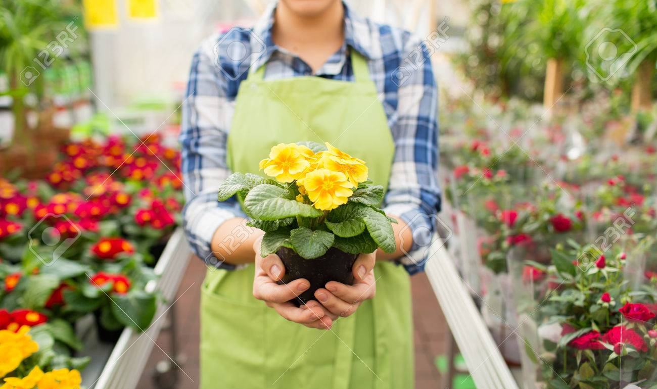 people gardening and profession concept close up of happy woman or gardener holding flowers