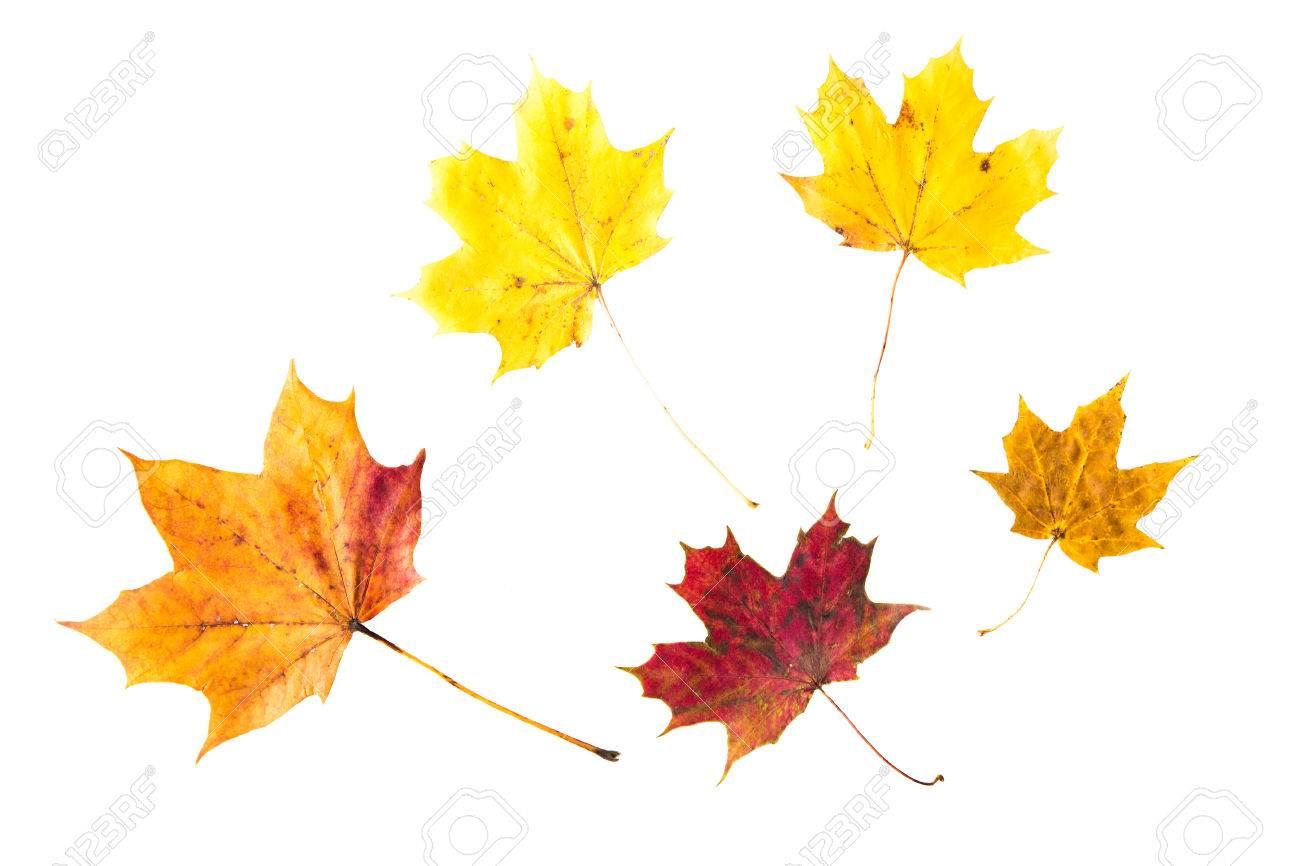 Natur Jahreszeit Herbst Farbpalette Und Botanik Konzept Trocken