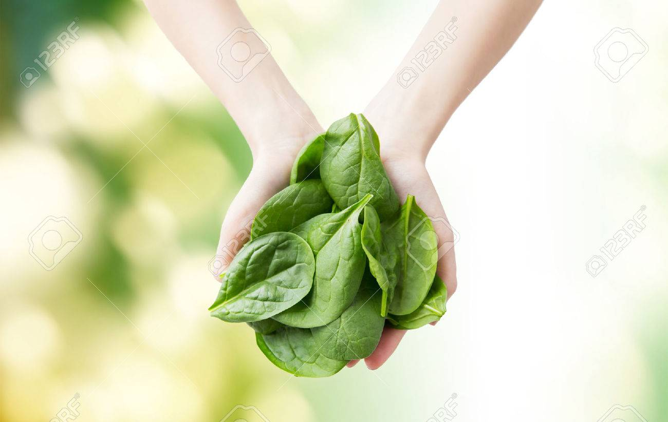 healthy eating, dieting, vegetarian food and people concept - close up of woman hands holding spinach over green natural background Stock Photo - 53969322