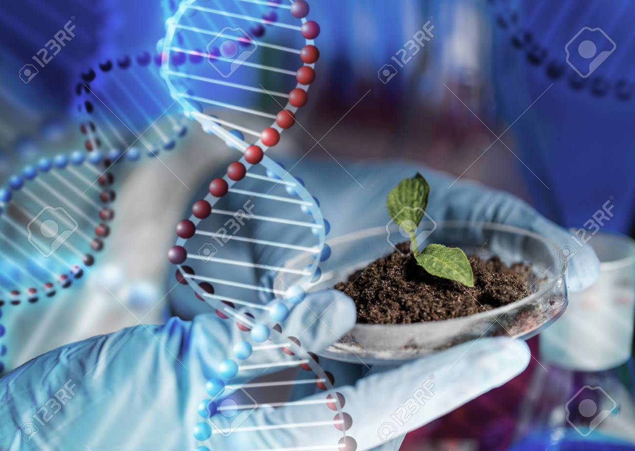 science, biology, ecology, research and people concept - close up of scientist hands holding petri dish with plant and soil sample in bio laboratory over dna molecule structure - 60214873