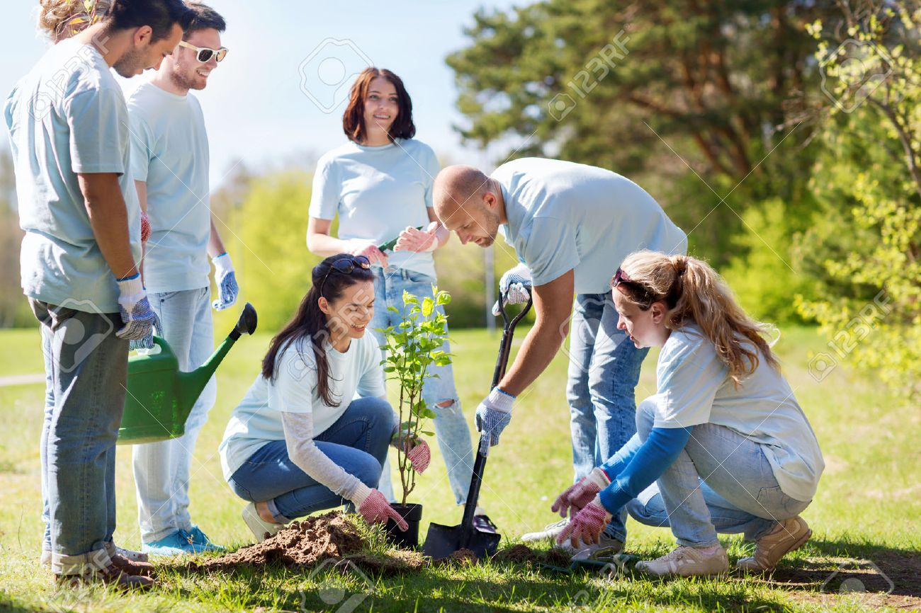 volunteering, charity, people and ecology concept - group of happy volunteers planting tree and digging hole with shovel in park Standard-Bild - 65024288
