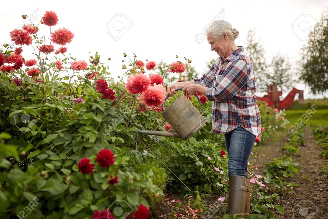 Riego de la mujer mayor de las flores en el jardín de verano